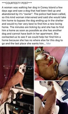 9/19/16 COURTESY POST!! PLEASE SHARE TO HELP MOWGLI /ij🐾🐾  https://m.facebook.com/story.php?story_fbid=1016468318462223&id=268612969914432&__tn__=%2As