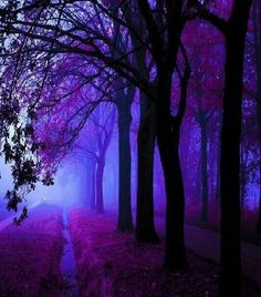 Find images and videos about nature, purple and trees on We Heart It - the app to get lost in what you love. Look Wallpaper, Purple Wallpaper, Beautiful Nature Wallpaper, Beautiful Landscapes, Dark Purple Aesthetic, Purple Art, Purple Trees, Deep Purple, Nature Aesthetic
