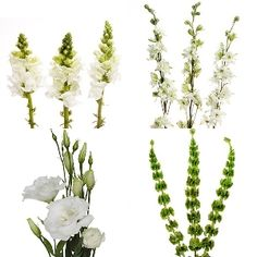 This Filler Flower Package features 2 bunches of Lisianthus, 2 bunches of Snapdragons, 2 bunches Larkspur, 2 bunches Stock and 2 bunches of Bells of Ireland. Our award-winning filler flowers combo pack is the perfect combination for do-it-yourself brides looking to add gorgeous height to their...