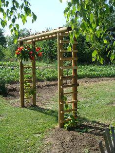 Garden Trellis, Garden Gates, Bamboo Garden Fences, Bean Trellis, Fenced Garden, Grape Vine Trellis, Wood Trellis, Garden Shrubs, Grape Arbor