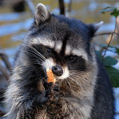 Food Critic by Vesuvianite     Crucial Moments of the Wild Life