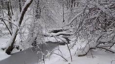 A tél báli ruhája