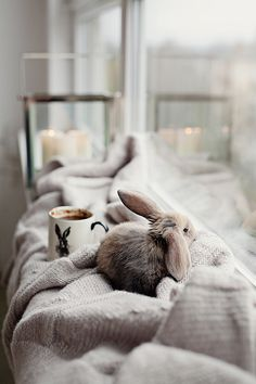 Don't you just want to cuddle this pet rabbit? Don't you just want to cuddle this pet rabbit? Cute Baby Bunnies, Cute Babies, Pet Rabbit, Pet Bunny Rabbits, Bunny Bunny, Easter Bunny, Cute Little Animals, Adorable Animals, Cute Creatures