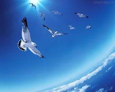 """""""Do crespo mar azul brancas gaivotas/  Voam - de leite e neve o céu manchando,/  E vão abrindo às regiões remotas/  As asas, em silêncio, à tarde, e em bando...""""  (Luís Delfino)"""
