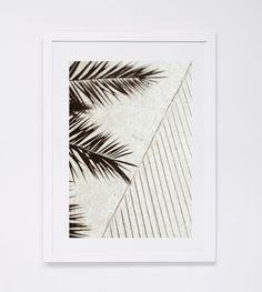 Palm Shadow 1