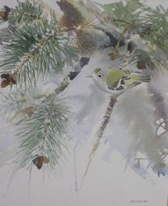Watercolour Painting  » Goldcrest in pine tree http://www.davedalyartist.com