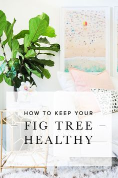 Fiddle leaf fig trees are the go-to plant for interior designers, and they tend to sit proudly in the corners of perfectly decorated spaces. Check out these easy tips to keep your tree pretty, happy, and healthy!