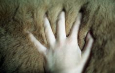 fur :: touch :: info@courtsgardengallery.com