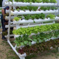 Hydroponic garden idea