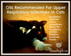 For more info about using essential oils for cat (contrary to  mislead belief, essential oils are NOT toxic to cats) please refer to Melissa Shelton, DVM who uses essential oils in her vet office. She has a doctorate of veterinary medicine and has used essential oils extensively in her office with animals, including cats.
