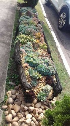 steingarten Nice cactus & succulent strip along driveway Water Garden Feature - How To Save On The P Succulent Landscaping, Succulent Gardening, Front Yard Landscaping, Container Gardening, Landscaping Ideas, Succulent Garden Ideas, Succulent Plant, Vertical Succulent Gardens, Urban Gardening
