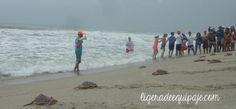 Buena suerte y buena mar! Liberación de #tortugas marinas en las playas de #SantaMarta #freedom #ocean #underwater #dive #travel #nature #Colombia # #PlanetEarth