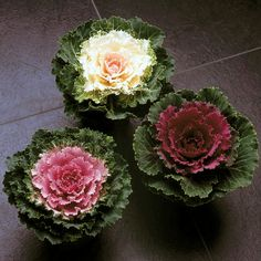 Love ornamental kale/cabbage for winter flower beds. I've gotta try this.