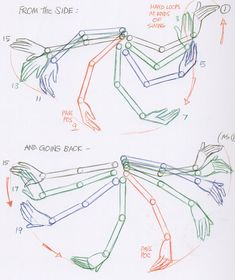 arms in a walk cycle - Recherche Google