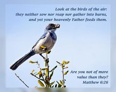 From Daily Scripture Project by artist Dawn Currie - Look at the birds of the air: they neither sow nor reap nor gather into barns, and yet your heavenly Father feeds them. Are you not of more value than they? Matthew 6:26  #scripture #christianart #biblequotes