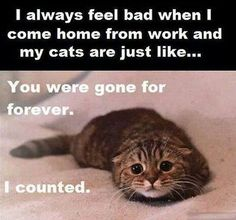 Things Only Cat Owners Will Understand - World's largest collection of cat memes and other animals Funny Animal Memes, Cute Funny Animals, Funny Cute, Hilarious, Funniest Animals, Crazy Cat Lady, Crazy Cats, Crazy Dog, Cute Animal Pictures