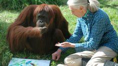 """Jane Goodall, 80 anni e non sentirli: """"Salvo le scimmie per salvare tutti noi"""""""