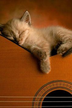cute sleeping kitty