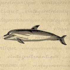 Printable Image Dolphin Digital Graphic Ocean Artwork Download