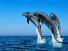Nuotare con i delfini, immergersi nel profumo del mare, nella freschezza di habitat incontaminati; in questo contesto basterebbe allungare una mano per poter sfiorare la pina del tanto amato delfino