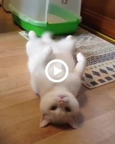 Pawsworld is the portal to your little cute friends world. Cute Baby Cats, Cute Little Puppies, Cute Funny Animals, Cute Baby Animals, Kittens Cutest, Funny Dogs, Animals And Pets, Baby Animals Pictures, Cute Animal Pictures