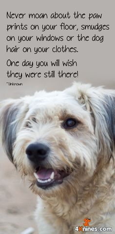Wishing our dogs will live longer.