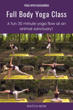 Get a full body workout with our 30 min. vinyasa yoga sequence, set at the Sweet Sanctuary Animal Rescue. This yoga for flexibility and strength class will help you tone and stretch your entire body. Click through to watch this free online yoga class on our YouTube channel. At home yoga | best yoga YouTube channels | best yoga online | free yoga workouts Full Body Yoga Workout, Yoga Workouts, 30 Minute Yoga, Become A Yoga Instructor, Yin Yoga Sequence, Strength Yoga, Yoga Youtube, Yoga For Stress Relief, Online Yoga Classes