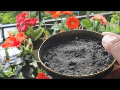 Natural Organic Fertilizer for all plants. Fertilizer For Plants, Organic Fertilizer, All Plants, Garden Plants, Gutter Garden, Small Garden Design, Balcony Garden, Agriculture, Gardening Tips
