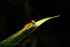 Dragonfly by artlee298 #nature #mothernature #travel #traveling #vacation #visiting #trip #holiday #tourism #tourist #photooftheday #amazing #picoftheday