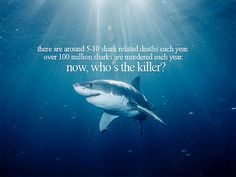 Save The Sharks - Stop Shark Finning