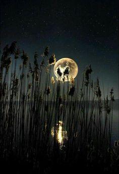 Raindrops and Roses Moon Moon, Moon Art, Blue Moon, Moon Shadow, Stars Night, Stars And Moon, Sombra Lunar, Raindrops And Roses, Shoot The Moon