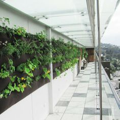 Transform a wall into an amazing vertical garden simply with this living wall system
