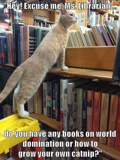 The Funny Connection Between Cats & Books