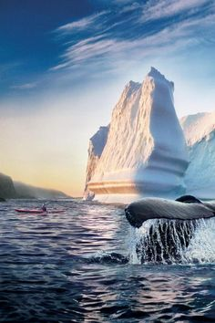 Whales in Newfoundland, Canada >>> great shot! This is what I am proud of it's where I live my life