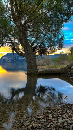 Trees By The Water wallpaper