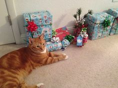 Guarding cat business watching Christmas gifts...