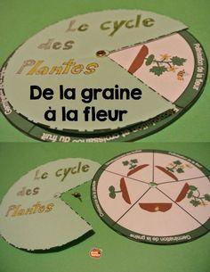 La roue du cycle de vie des plantes // Cahier Interactif