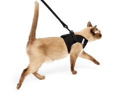 Harness Leash Set Cat Harness for traveling cats and kittens.Cat Harness for traveling cats and kittens. Best Cat Harness, Kitten Harness, Dog Harness, Rex Cat, Super Cat, Pet Carriers, Dog Leash, Cool Cats, Have Time