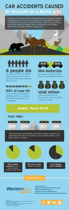 Car Accidents Caused By Wildlife In Alberta And BC [INFOGRAPHIC] #wildlife #caraccidents