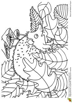 Fall Coloring Pages, Pattern Coloring Pages, Animal Coloring Pages, Coloring Pages For Kids, Coloring Sheets, Adult Coloring, Coloring Books, Autumn Crafts, Autumn Art