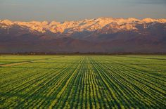 San Joaquin Valley - California, where our tomatoes are grown