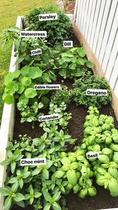 Spruce up your garden with these cheap and easy DIY garden ideas. From DIY planters to container gardening ideas, there are plenty of garden projects on a budget to choose from. Home Vegetable Garden, Fruit Garden, Edible Garden, Herbs Garden, Beginner Vegetable Garden, Raised Herb Garden, Small Vegetable Gardens, Herb Garden Design, Gardening For Beginners