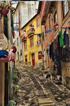 Alfama, Lisbon, Portugal, swinging beautiful city full of culture and great food ~ www.nl ~ for the best customized tours & tips in Nice, France ~ delicious healthy recipes created & home made by Elky ~ food. Sintra Portugal, Visit Portugal, Spain And Portugal, Portugal Travel, Places Around The World, Oh The Places You'll Go, Places To Travel, Places To Visit, Around The Worlds