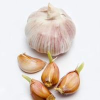 Zap Kitchen Odors - Make way for enticing holiday aromas by banishing these not-so-pleasant ones first - Good Housekeeping