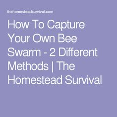 How To Capture Your Own Bee Swarm - 2 Different Methods   The Homestead Survival