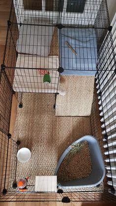Diy Bunny Cage, Bunny Cages, Rabbit Cages, Pet Bunny Rabbits, Pet Rabbit, Bunnies, Indoor Rabbit House, Indoor Rabbit Cage, Cavy Cage