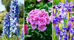 Ezeknek a régi virágoknak a Te kertedben is helyük van.