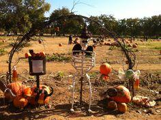 Bishop's Pumpkin Farm in Wheatland, CA
