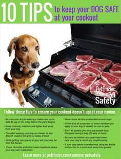 Keep Your Dog Safe At Your Cookout from @Petfinder.com.com