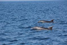 Versilia......e i suoi delfini!!!